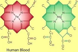 BLOOD - 1